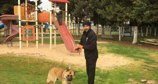 לקידת כלבים